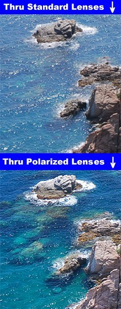 Thru Standard/Polarized Lenses